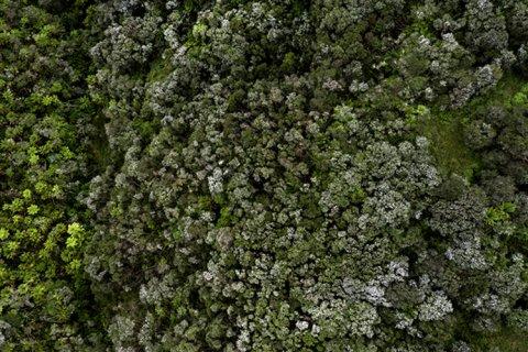 image-bush.jpg